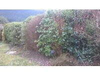 FREE - Selection of mature plants and trees - just remove them and take them away free