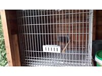Parrot Cage like new