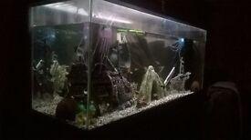 fishtank&stand