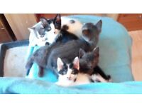 6 kittens - READ before you send a message please