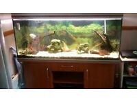 Rena 5ft fish tank and stand