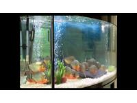 4ft Bow Front Fish Tank with Fluval 406 Filter