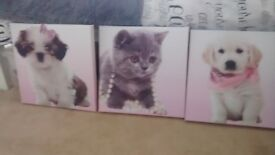 3 Canvas cute animal pictures