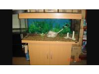 Various Community Tropical Fish and tropical set up