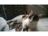 CAT*FOR*SALE*LOVING*BEAUTIFUL*FOR *REHOMING