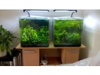 shrimps and tanks for sale.