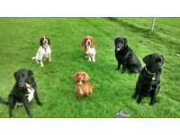 Dog Walker Cardiff - Dog Walking Service