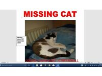 Missing Cat Harrow