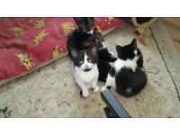 Kittens. 2 girls left