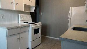 Newly renovated 2BD for just $1085 plus free internet!!! SD $350 Edmonton Edmonton Area image 2