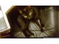 Missing cat - Molko (from Denton Close)