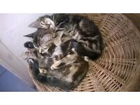 Two baby girls kittens looking for new home