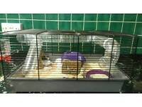Gebel and hamster cages various all in excellent condition with extras £20 each