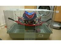 £20 if collected today - Rat / Hamster/Small Animal cage with accessories