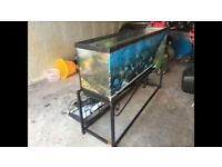 Fish Tank 6ft great condition
