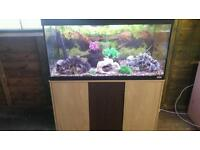FLUVAL ROMA 200 LITRE FISHTANK WITH OAK CABINET IN EXCELLENT CONDITION