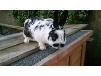 3 rabbits