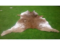 Rodeo Cowhide Rug at 1/4 of new price about 2m x 2m