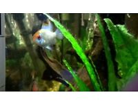 Free to good home selection of tropical fish