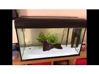 Aqua One EcoStyle 81 Black Aquarium fish tank marine with brand new oak stand