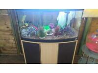 FLUVAL VINCENZA 180 LITRE BOWFRONT FISHTANK WITH OAK CABINET