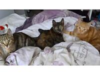 3 beautiful kittens for sale in Stoke-On-Trent
