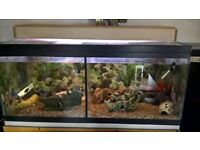 full set up fish tank cichlids for sale in Grimsby