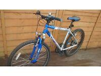 mongoose mountain bike adult