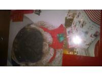 christmas pug duvet cover
