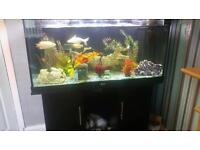 4FT JEWEL RIO 300 350 LITRE FISHTANK IN BLACK WITH MATCHING CABINET AND BUILT IN FILTER SYSTEM