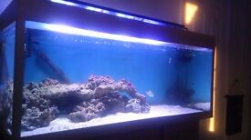 4x2x2 fish tank equipment not included (tank only)