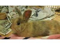 Bonded mixed pair of rabbits