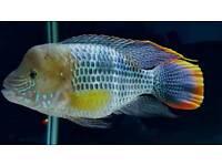 Tropical fish SA