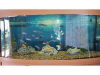 Juwel Vision 450 5ft Aquarium