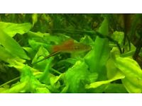 Tropical fish plant