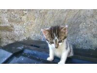 Kitten must go to forever home