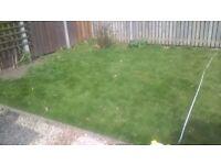 Free grass turf, 20 square meters