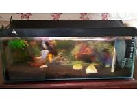 Tropical fish tank with 3 large fish