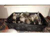 Baby bunnies ready in 3 weeks
