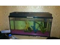 Fish tank approx 2 and half foot