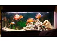 4ft fish tank and fish