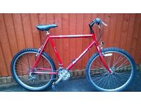 Large Raleigh Mountain Bike.....A Big Bike for the Taller Man..... Small Price £65