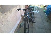 mountain bike muddy fox(adult)