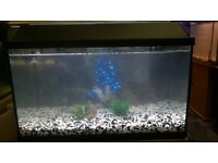 60 Litre 2 Foot aquarium fish tank setup *just add fish*