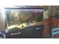 120 liter fish tank for sale