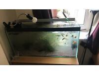 3 foot fish tank