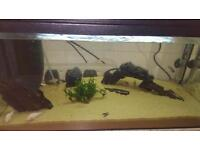 Tropical Fish tank and fish forsale