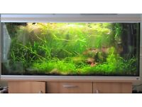 Tropical freshwater aquatic plants for sale - various, see list