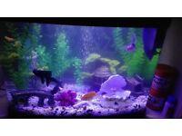 Aquarium 40L for sale!