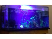 Marine beta 4x2x2 fish tank fx 6 filter